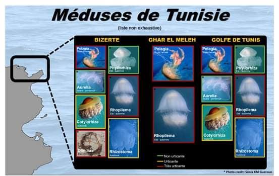 table noire avec des photos de meduse et une carte de la tunisie