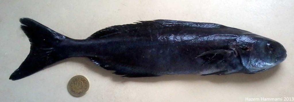 un poisson noir à coté d'une pièce de monnaie